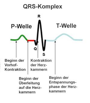 Herzfunktionen anhand einer Grafik